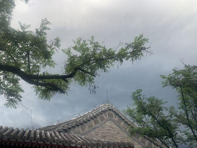 北京四合院里的花木